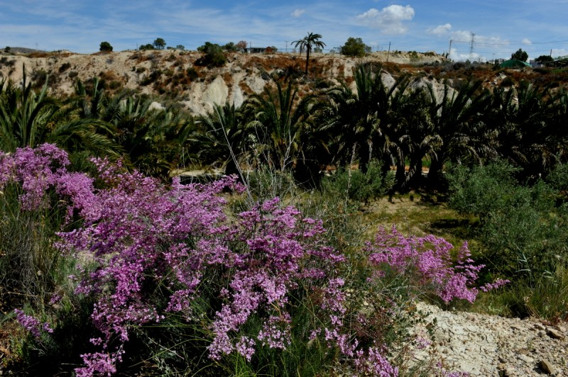 Walking routes in the countryside of Abanilla: the Rio Chicamo, the badlands and the mountains