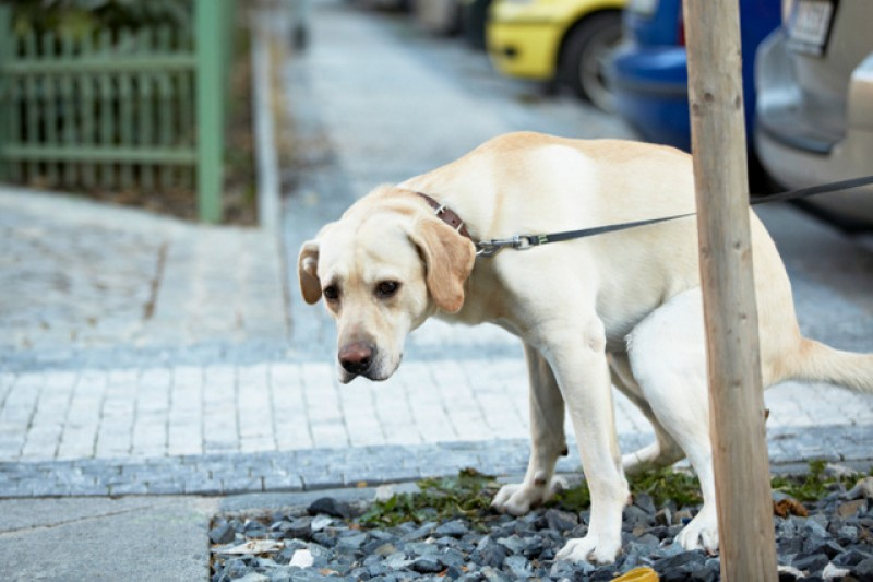 3,000 fines a year in the city of Murcia could be paid by performing community service