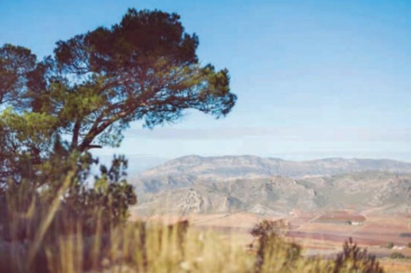 Walking in Sierra del Carche in Jumilla