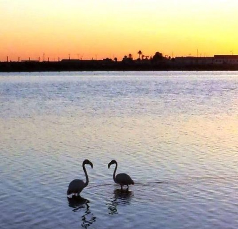 <span style='color:#780948'>ARCHIVED</span> - Flamingos busy applying make-up and dancing in the Salinas Regional Park