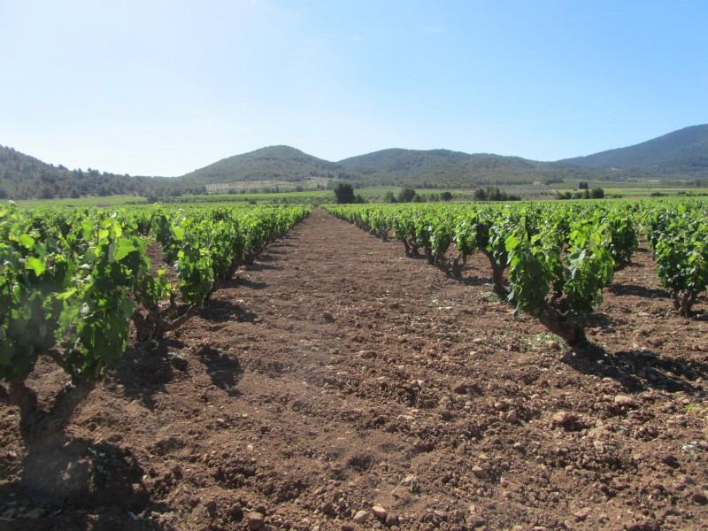 <span style='color:#780948'>ARCHIVED</span> - 29th June The Murcia Wine Bus visits the Ruta del Vino in Bullas