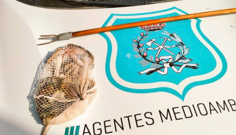 <span style='color:#780948'>ARCHIVED</span> - Undersized octopus seized from amateur harpoon user in Puerto de Mazarrón