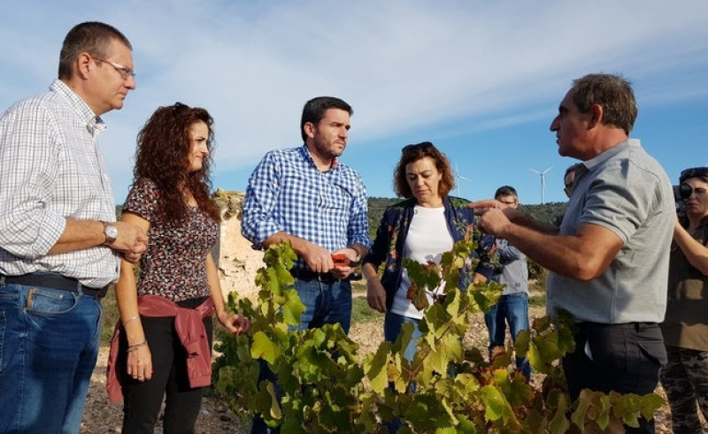 <span style='color:#780948'>ARCHIVED</span> - Grape harvest 60 per cent complete with top quality reported in Jumilla