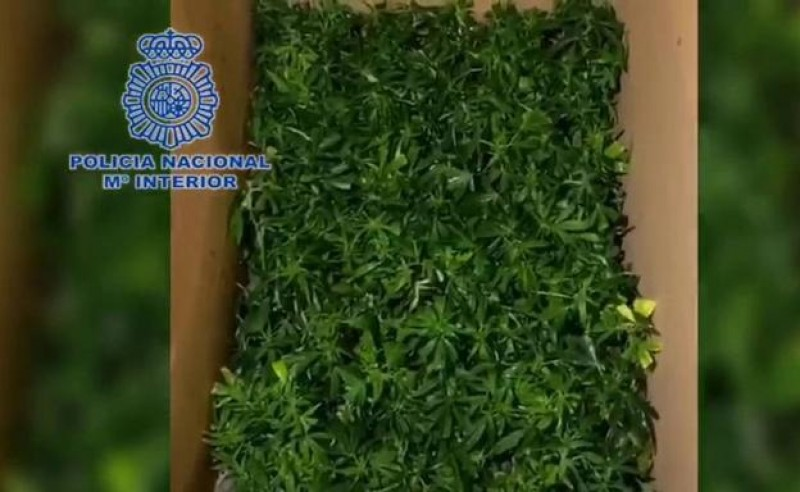 <span style='color:#780948'>ARCHIVED</span> - Two arrested while driving in Murcia with 600 marijuana plants in the back of a van