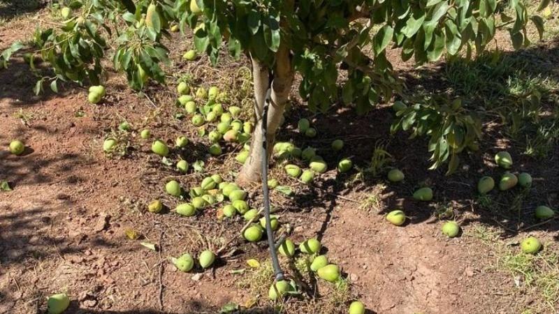 <span style='color:#780948'>ARCHIVED</span> - Heatwave devastates sensitive crops in Murcia