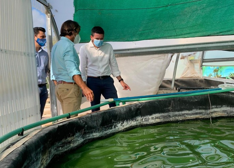 <span style='color:#780948'>ARCHIVED</span> - Microalgae farmed for commercial use in San Javier